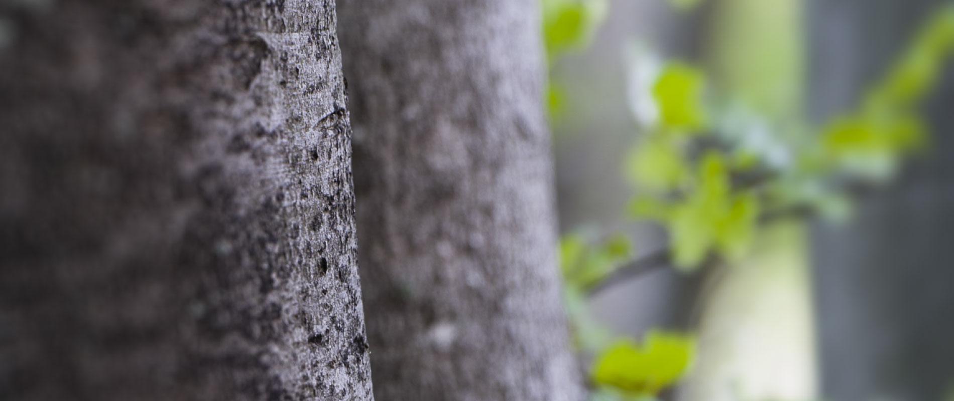Holzspalter + Kreissägen messerscharf kalkuliert